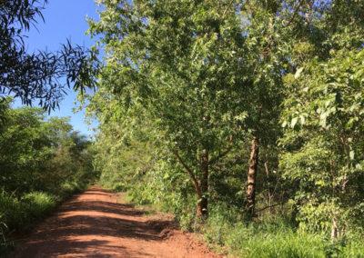 naturwald_umweltschutz_baeume