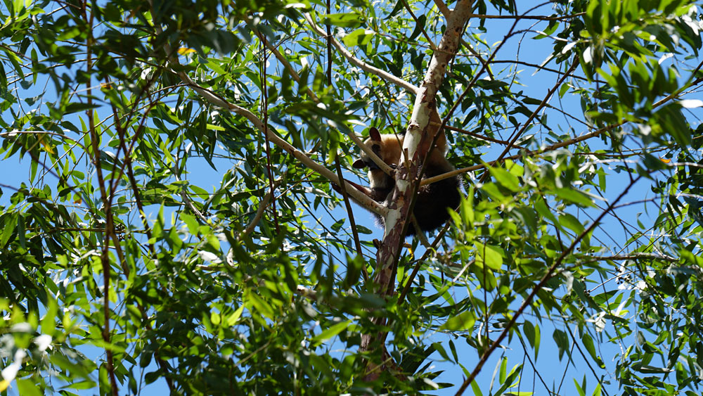Unsre Wälder - Lebensraum für viele Tierarten